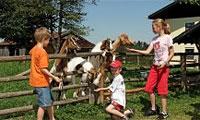Bauernhof Urlaub Bayerischer Wald